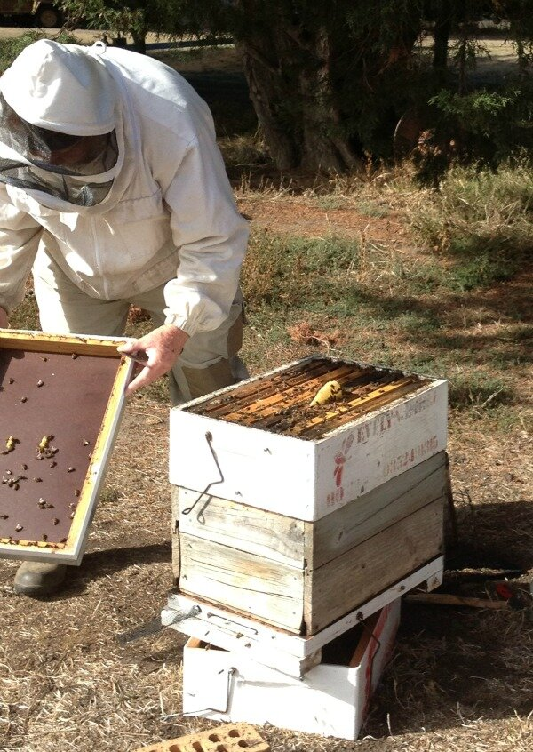 Beekeeping course.