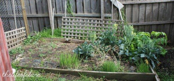 In My Garden… August 2013
