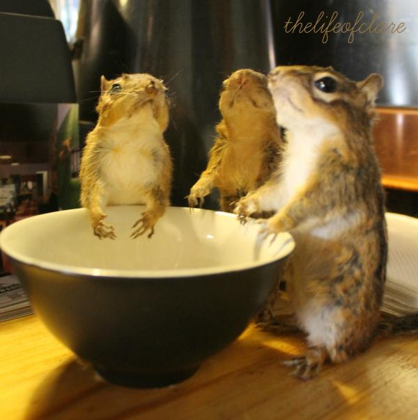 Awkward chipmonks