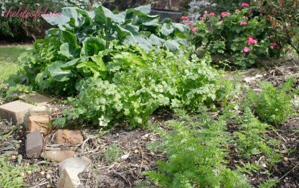 mish mash garden bed