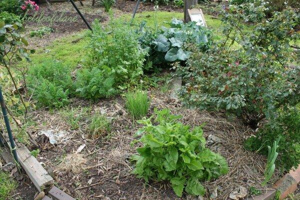 In My Garden… November 2013