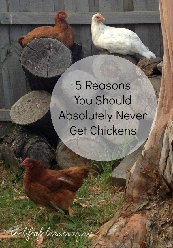 5 Reasons That You Should Absolutely Never Get Chickens