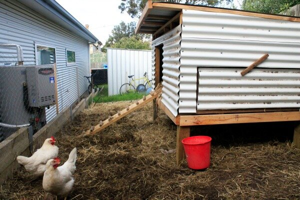 side chicken coop