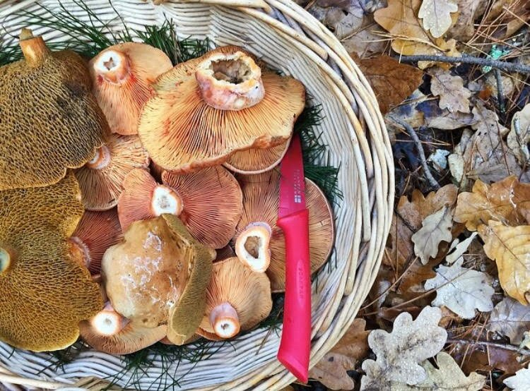 Mushroom Foraging with Whole Larder Love