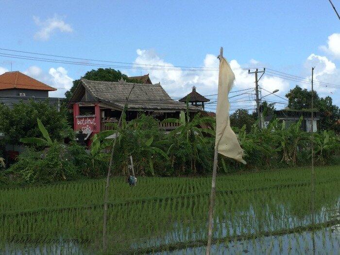 Betelnut Cafe Canggu