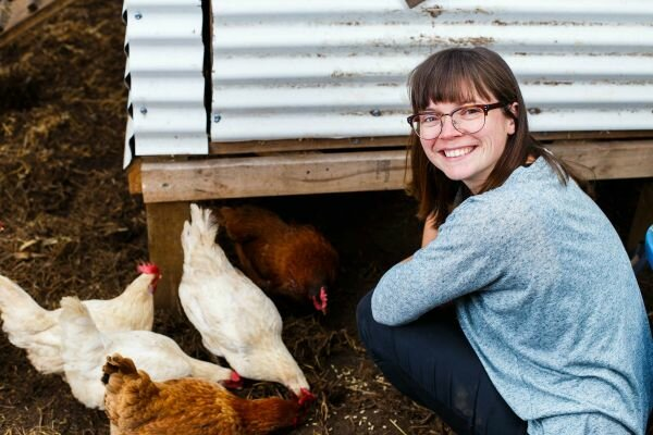 chickens thelifeofclare
