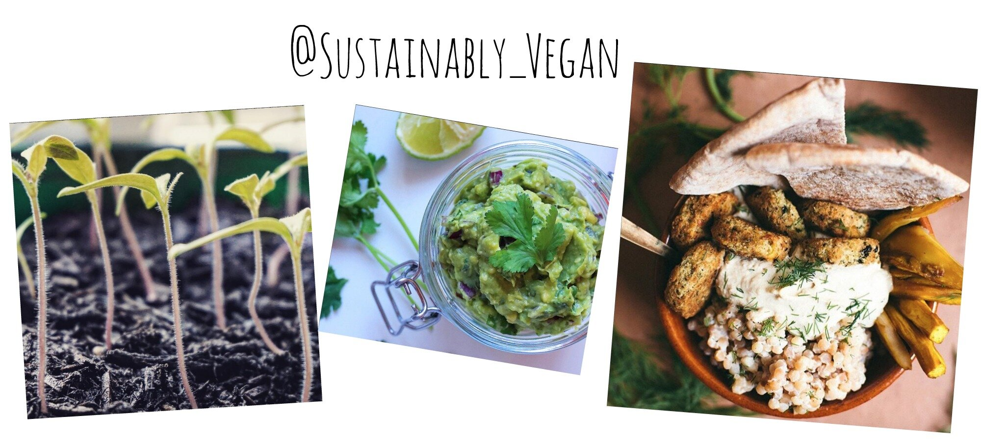 sustainably_vegan instagram