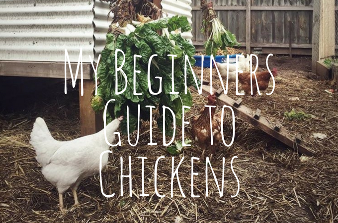 My Beginners Guide to Chickens