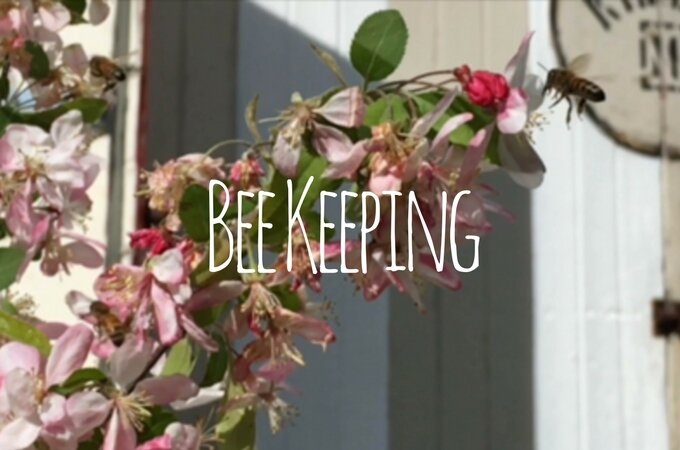 bee-keeping-feature-image